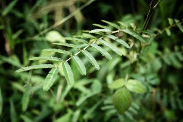 熱帯の葉のマクロ撮影