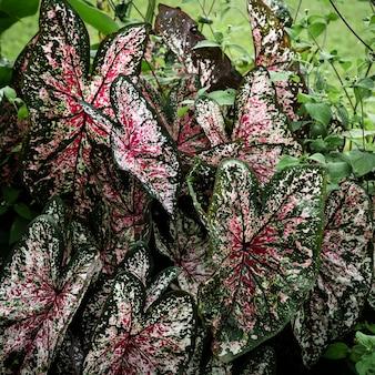 美しい熱帯の葉の背景