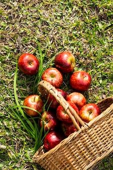 Вид сверху корзина с яблоками на траве