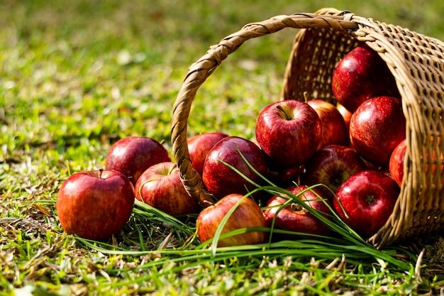 わらのバスケットの正面の赤いリンゴ