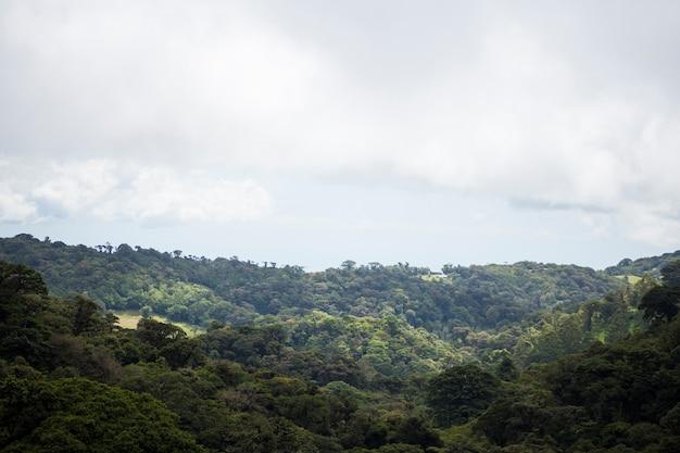 Вид на тропический лес в коста-рике
