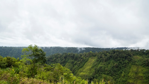 曇り空を背景に静かな熱帯雨林