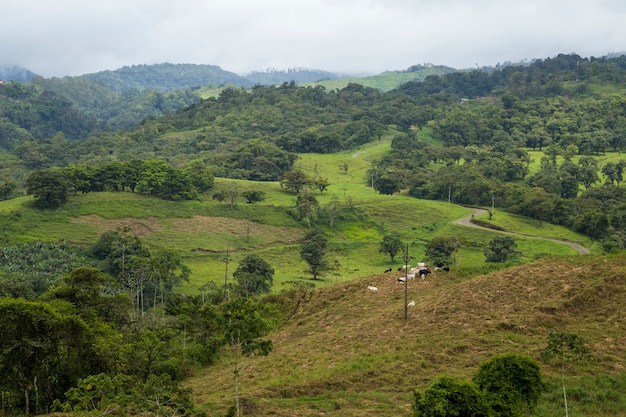コスタリカの雨天の熱帯雨林ビュー