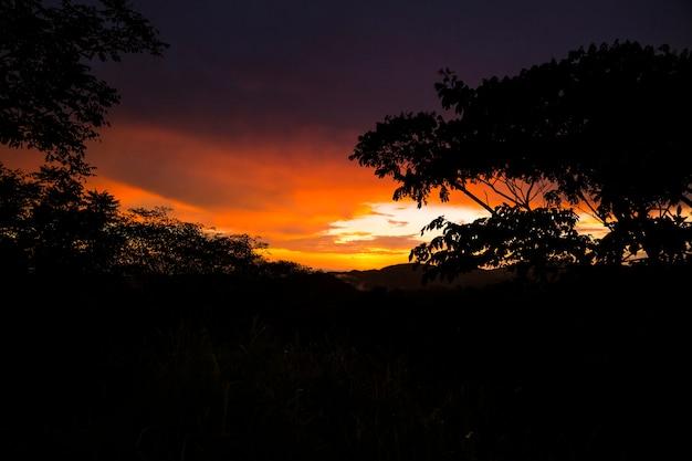 熱帯雨林の日没時に木と山のシルエット