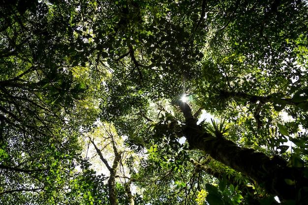 森の木の枝を通る日光