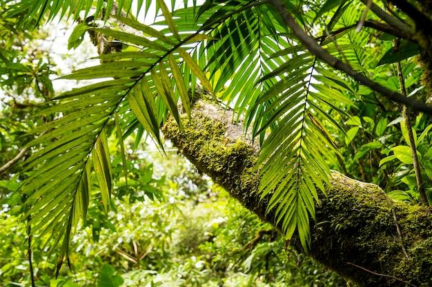 コスタリカの緑の森でコケの木