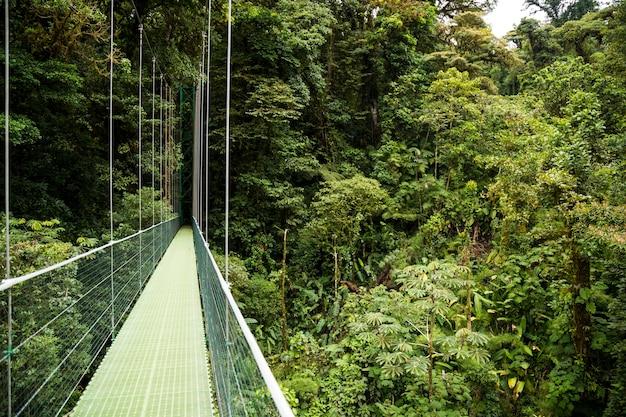 コスタリカの緑の熱帯雨林の吊り橋