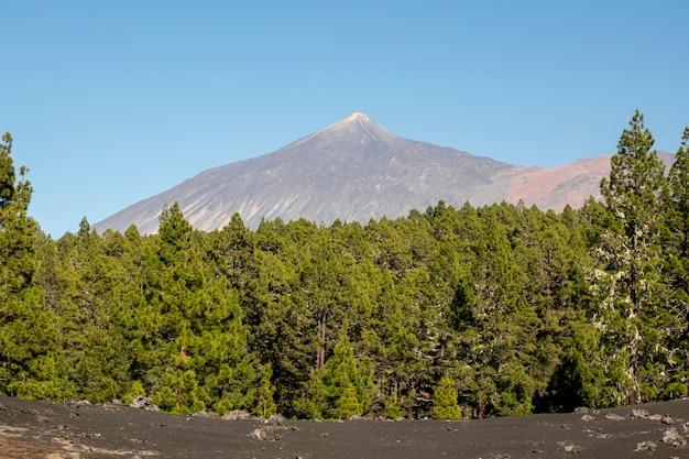 山のピークの背景を持つ森林