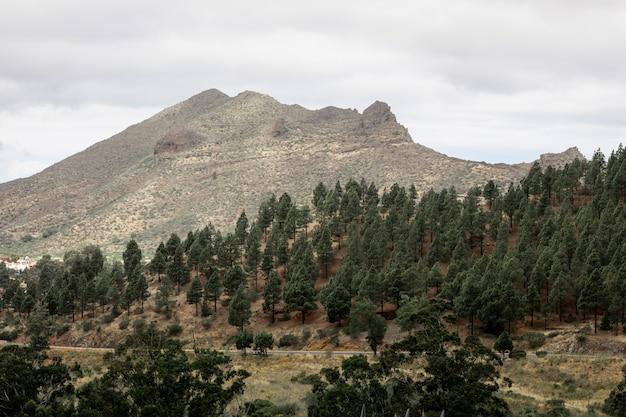 曇りの背景を持つ樹木が茂った山の斜面