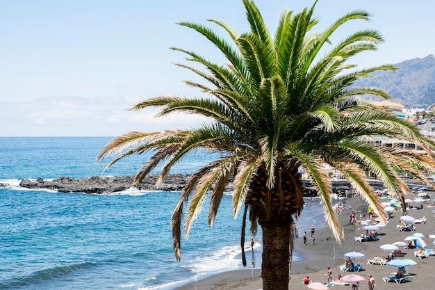Одинокая кокосовая пальма на берегу моря