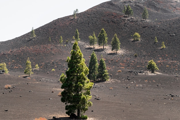 火山のレリーフに広がる木々
