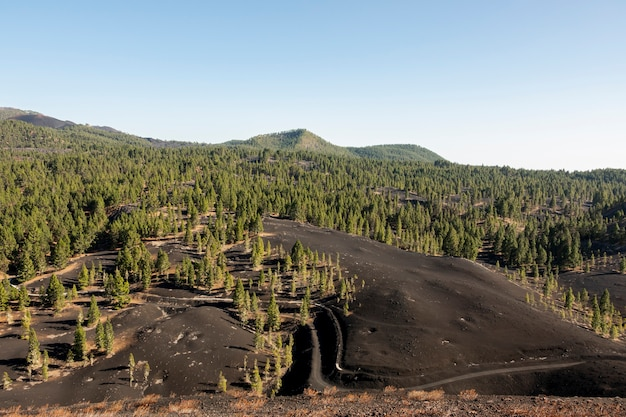 Распространенный лес, растущий на вулканической почве
