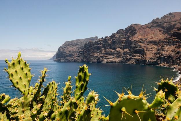 背景に崖ととげのあるサボテン