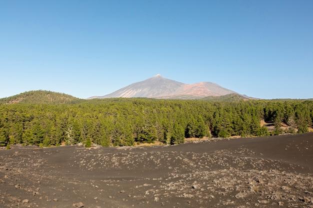 背景に山と常緑樹林