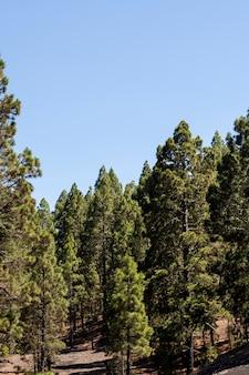 晴天の常緑樹林