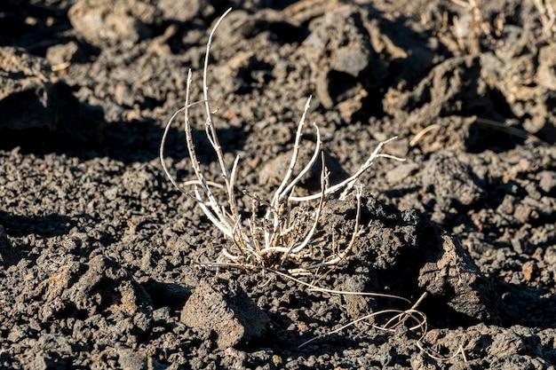 黒い土のビュー乾燥植物を閉じる