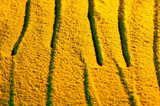 黄色い砂の上にランダムに描かれた線