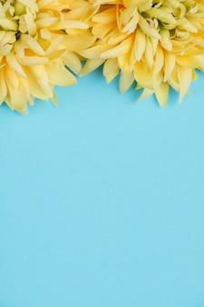 Желтые цветы и синий фон с копией пространства