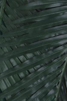 緑の熱帯の葉のクローズアップ