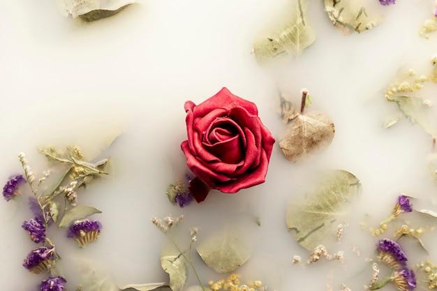 白い色の水に赤いバラ