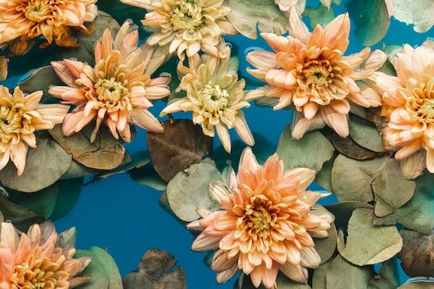 青い水の中のフラットレイアウト淡いオレンジ色の菊