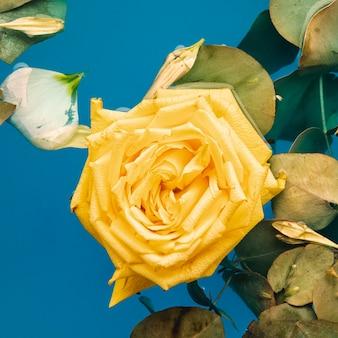 水のクローズアップのトップビュー黄色いバラ