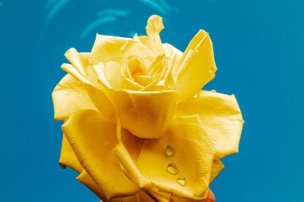 水のクローズアップで黄色いバラ
