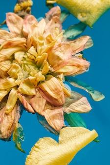 青い水の中の淡い花