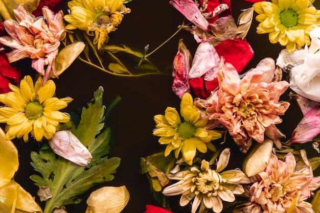 水にフラットレイアウトマルチカラーの花