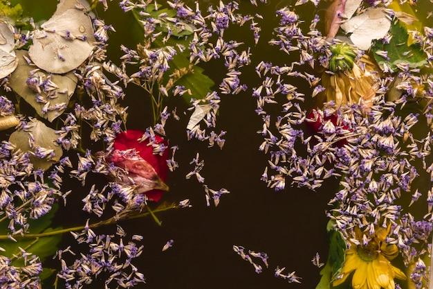 Разные цветы в черной воде