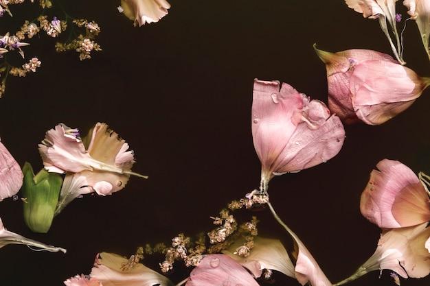 黒い水の中の美しいピンクの花
