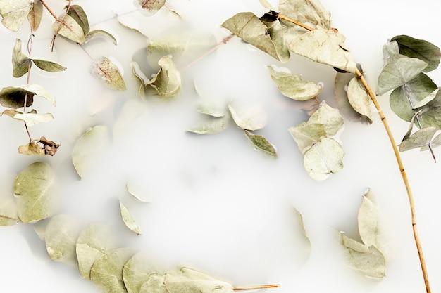 白い水の葉