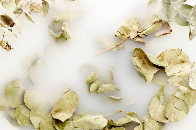 白い水の中の淡い葉