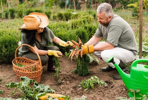 ニンジンを収穫する年配のカップル