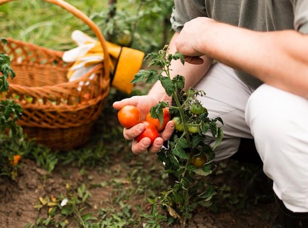 トマトを保持しているクローズアップの女性