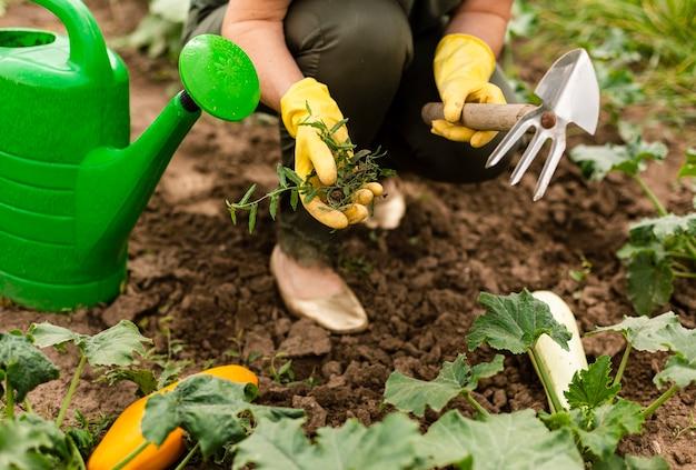 Крупным планом женщина заботится о посевах