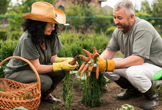 Пожилая пара собирает морковь