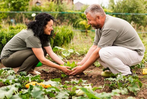 Пожилая пара ухаживает за урожаем