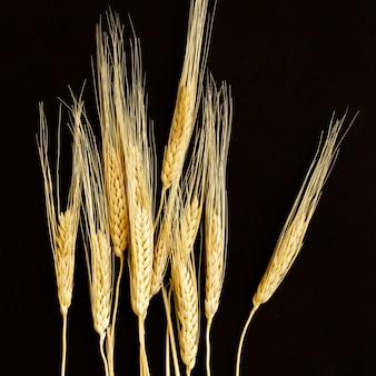 小麦と黒の背景