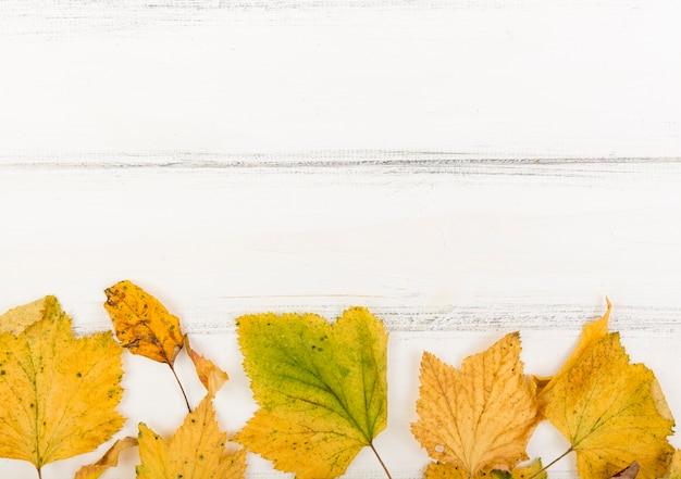 Вид сверху минималистичные осенние листья с копией пространства