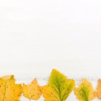 Крупным планом сухие осенние листья с копией пространства