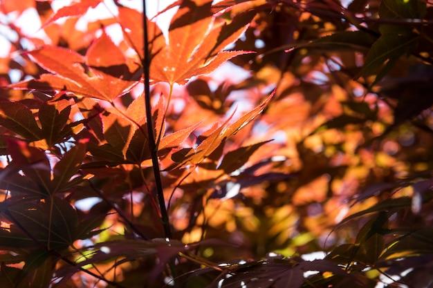 クローズアップカラフルな葉秋のコンセプト