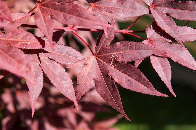 秋のシーズンは秋のコンセプトを残します