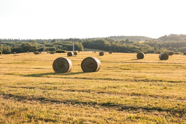 ヘイズフィールドと秋の風景