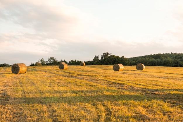 乾燥したフィールドのある秋の風景