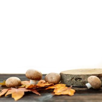 Вид спереди грибов на листьях