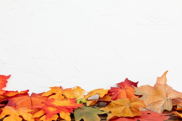 白い背景と色の葉
