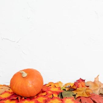 色の葉と白い背景のカボチャ