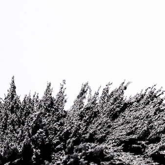 白い背景に分離された磁気金属シェービング