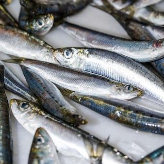 氷の上で新鮮な魚のクローズアップ